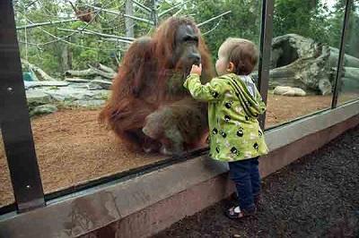 باغ وحش تفلیس  در تور گرجستان