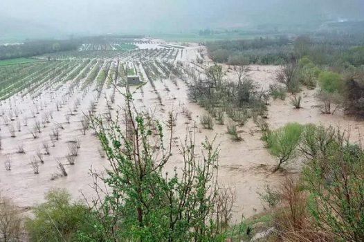 خسارت ۷۷ میلیارد و ۲۰۰ میلیون تومانی سیل به کشاورزی جنوب استان کرمان/ حذف بودجه احداث سیل بندها، حجم خسارات را افزایش داد